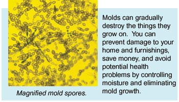 Moisture and Mould Spores